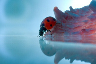 25 Beautiful Macro Photography Shots